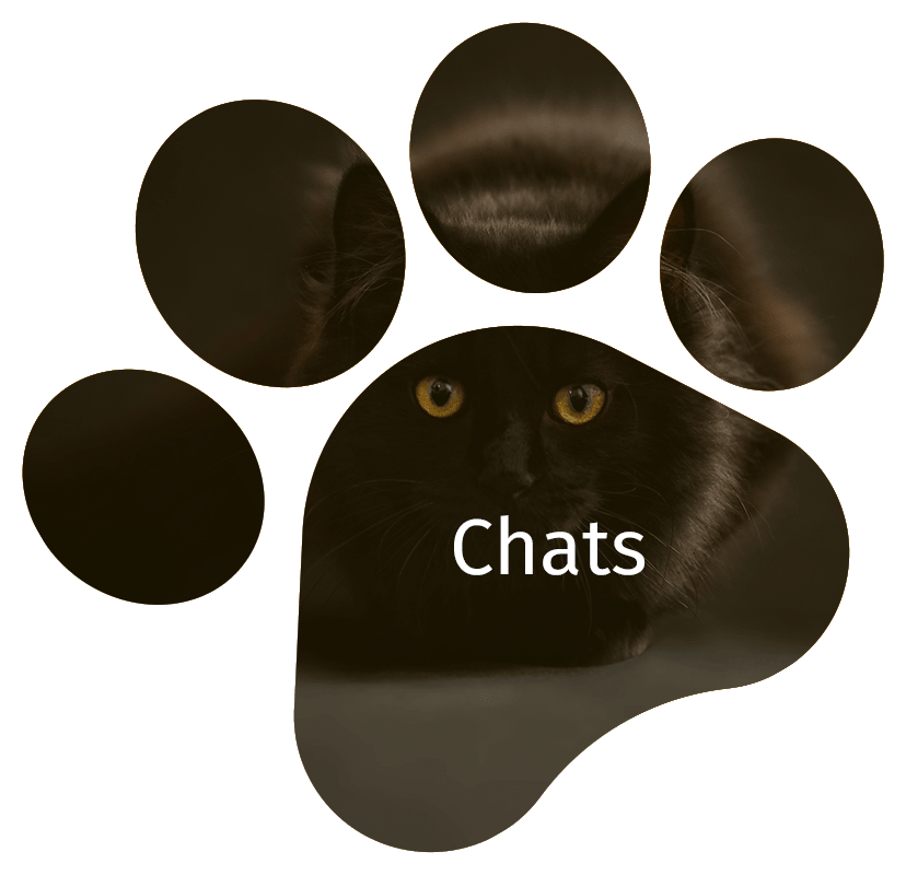 image-chat-hover