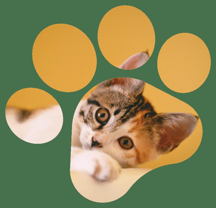 image-chaton