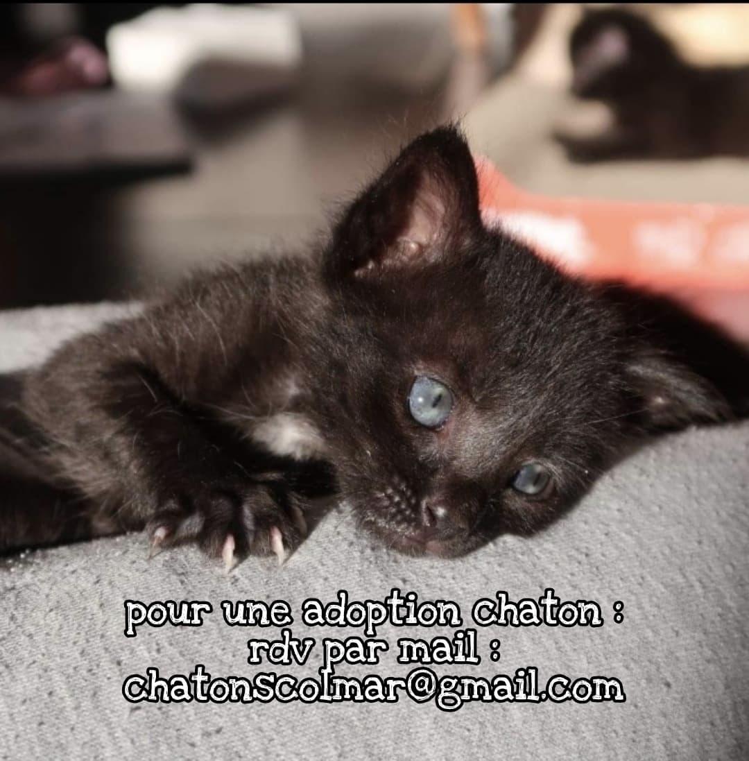 Pour une adoption chaton : rdv par mail : chatonscolmar@gmail.com